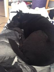Charie faulenzt auf ihrem neuen Bett