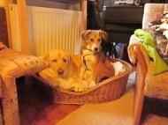 Dana liebt ihr Freund Labrador Obelix