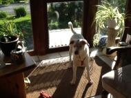 Susi hat auch ein super Zuhause gefunden