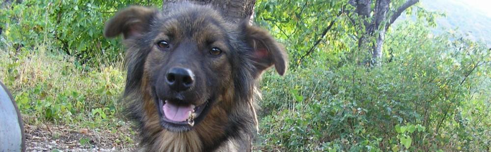 Tierhilfe Asenovgrad Bulgarien e.V. / Animalhelp Asenovgrad Bulgaria